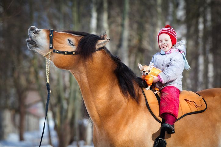 Horse riding and equestrian injury compensation