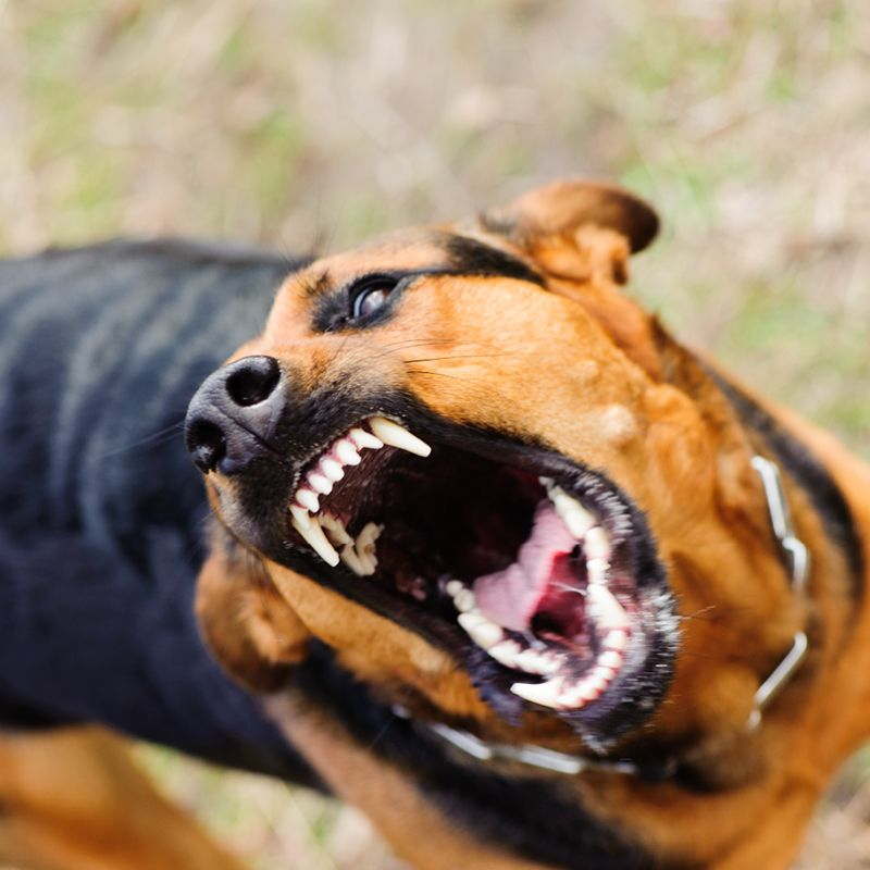 What to do if you have been attacked by a dog.